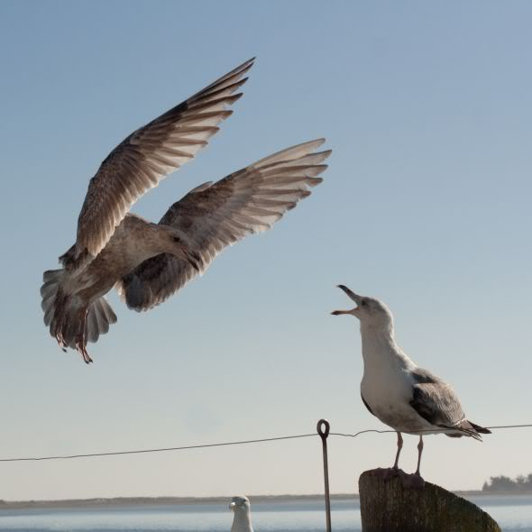 Asas Para Voar