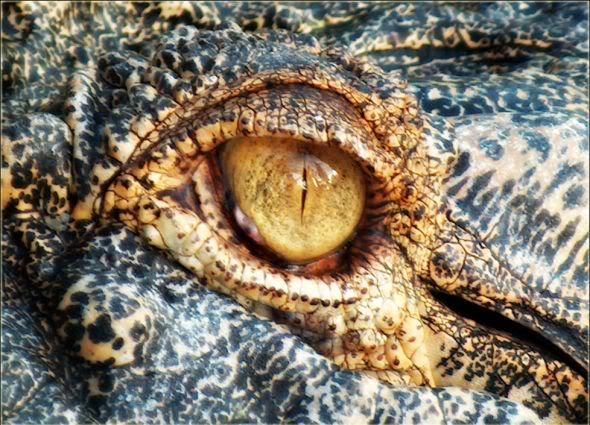 O Olho do Dragão
