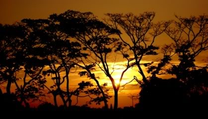 Por do Sol - Bosque