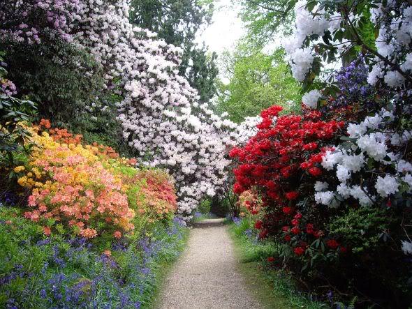 Primavera - Época de Fazer o Blog Florescer